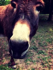 parkrun donkey