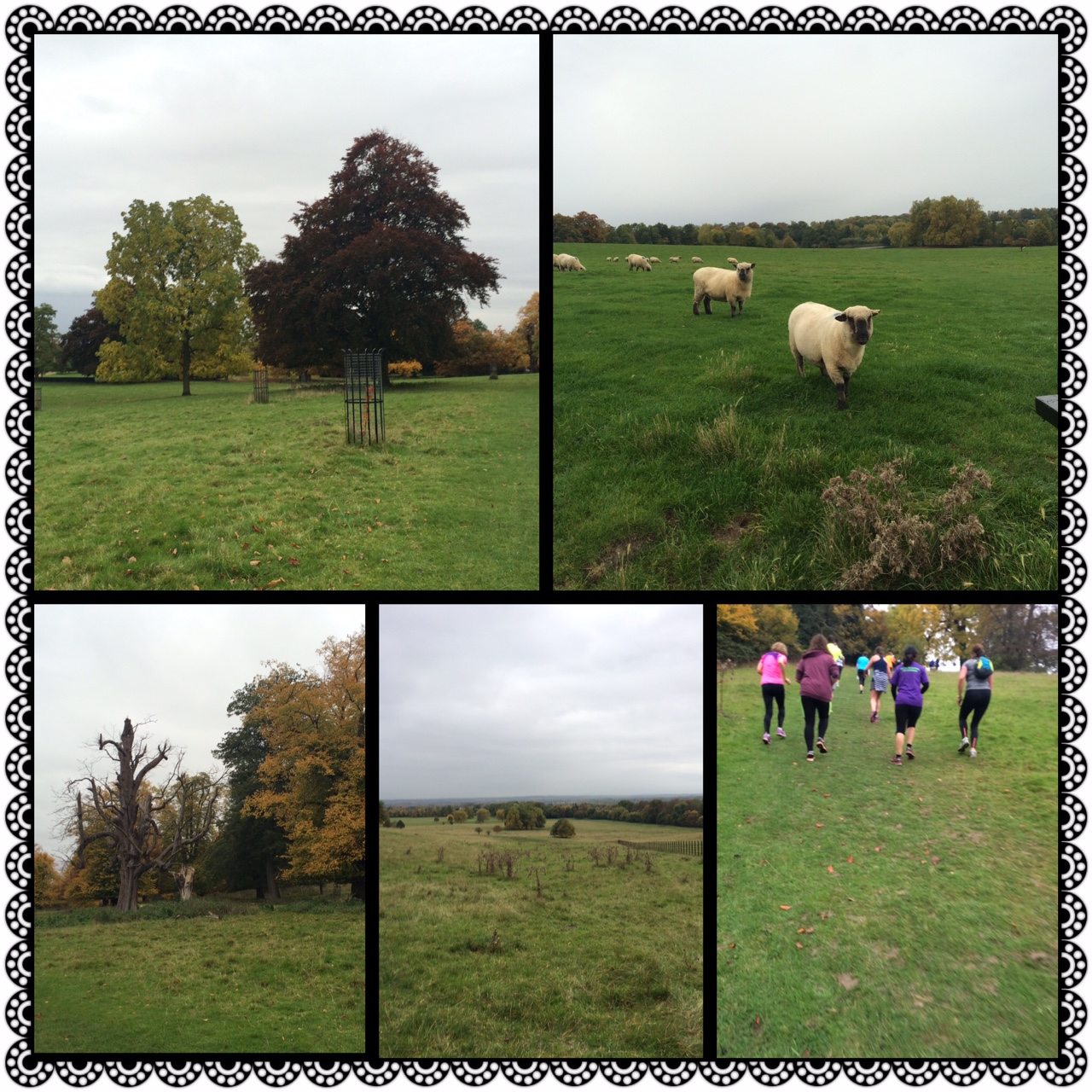 compilation of pictures from Wimpole Estate parkrun