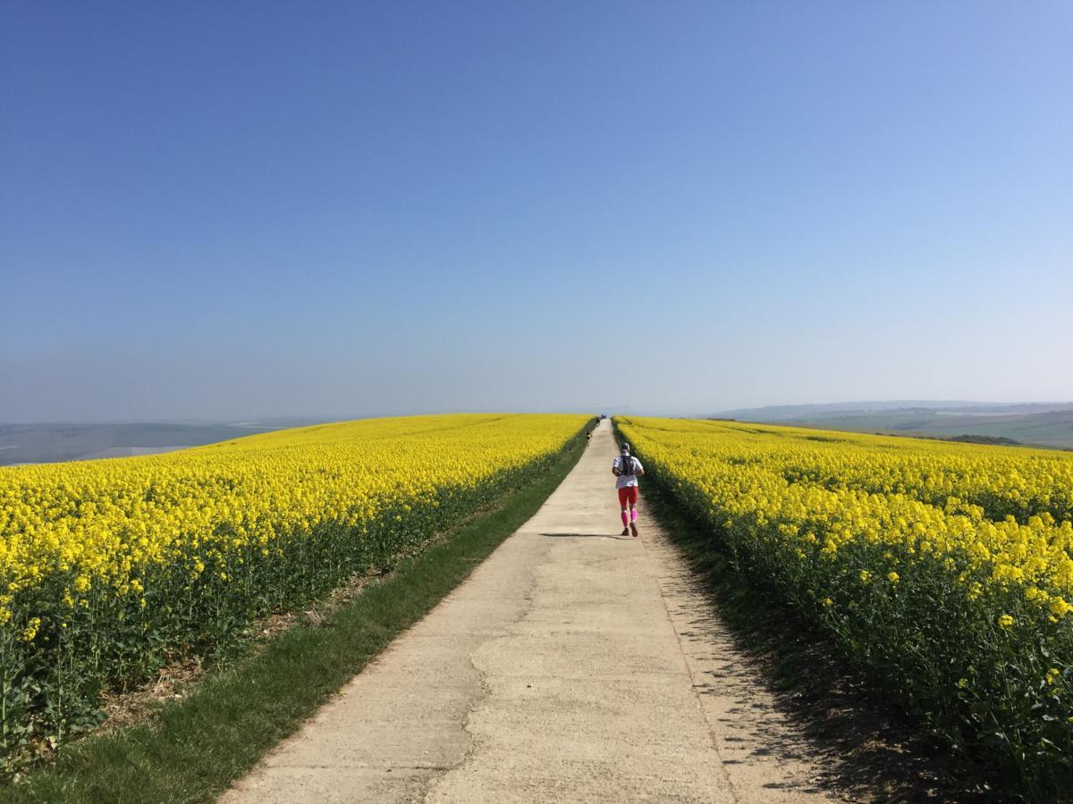 image - the yellow brick road