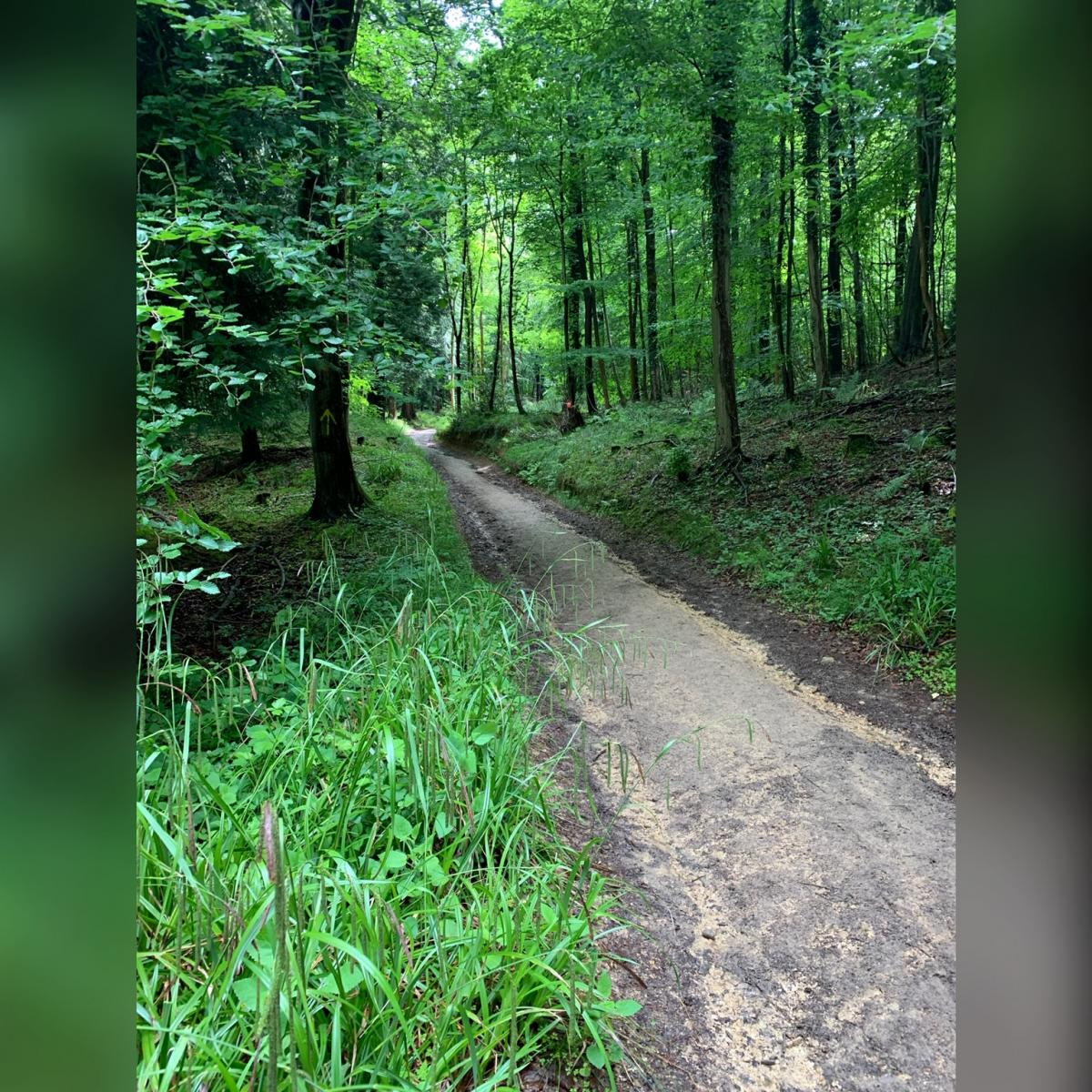 A muddy forest trail